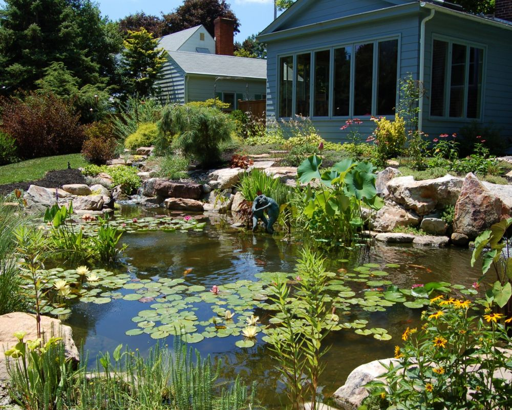 Backyard ecosystem fish ponds